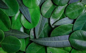 Картинка листья, фон, green, texture, background, leaves