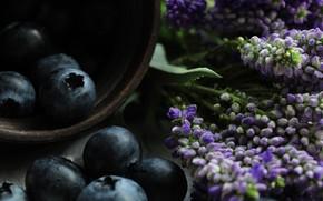 Картинка макро, цветы, ягоды, темный фон, еда, черника, чашка, миска, черные, букетик, сиреневые, композиция