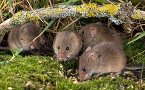 Картинка мох, мышки, крохи