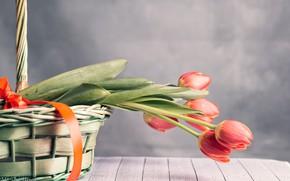 Картинка цветы, корзина, лента, тюльпаны