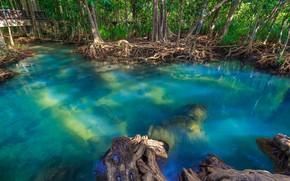 Картинка лес, озеро, река, forest, тропический, landscape, beautiful, lake, tree, tropical, mangrove, emerald, мангровый