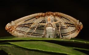 Картинка бабочка, мотылёк, моль
