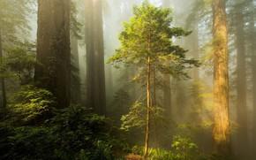 Картинка лес, туман, весна