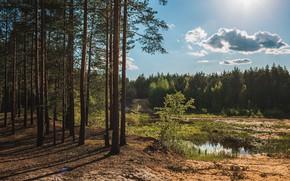 Картинка лес, небо, солнце, деревья, река, тень, шишки, Васильев Владимир