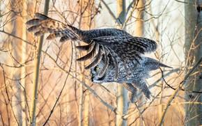 Картинка полет, ветки, сова, птица, крылья, перья, боке, неясыть