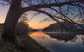 Картинка небо, закат, туман, озеро, пруд, отражение, дерево, птица, берег, вечер, дымка, лебедь, кусты, водоем, водная …