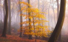 Картинка осень, лес, туман, листва