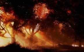 Картинка осень, лес, лучи
