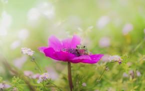 Картинка зелень, цветок, лето, макро, цветы, яркий, зеленый, фон, розовый, поляна, лягушка, размытие, весна, сад, сидит, …