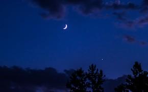 Картинка небо, облака, деревья, ночь, природа, луна