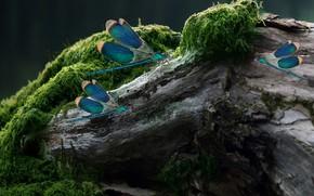 Картинка insect, moss, log