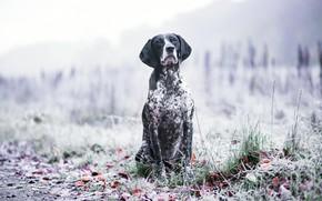 Картинка осень, природа, друг, собака