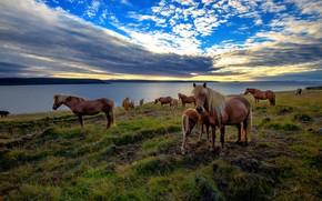 Обои море, закат, лошади