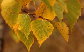 Картинка осень, лес, Листья