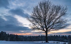 Обои зима, поле, лес, небо, облака, снег, закат, дерево, вечер, сумерки