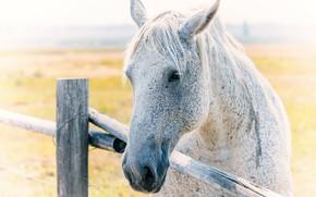 Картинка фон, конь, забор