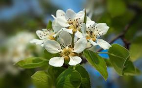 Картинка цветы, дерево, росток, весна, природы, пробуждение, ленц