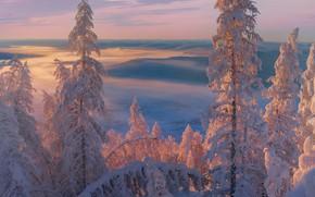 Картинка зима, деревья, пейзаж, закат, природа, туман, ели, снега, Якутия, Владимир Рябков