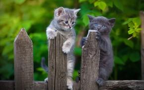 Картинка забор, котята, малыши, парочка, два котёнка