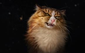 Картинка Паук, Кошка, Кот, Стиль, Арт, Art, Style, Cat, Spider, Illustration, Насекомое, Животное, Animal, Insect, Иллюстрация, …