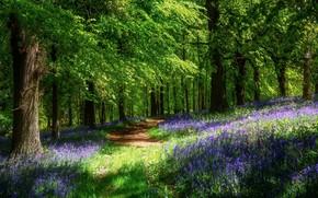 Картинка цветы, тропинка, весна, солнце, лес