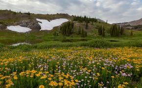 Картинка поле, цветы, горы, луг