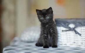 Картинка кошка, взгляд, котенок, черный, малыш, мордочка, милый, котёнок, корзинка, бантик