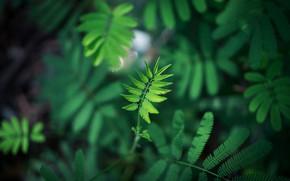 Картинка Листок, Природа, Листья, Растение, Растения, Macro, Leaves, Флора, by FOX, Green Leaf Plant, Close-Up