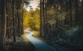 Картинка дорога, парк, весна