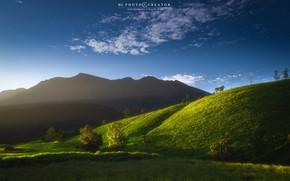 Картинка небо, деревья, природа, рассвет, холмы