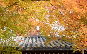 Картинка крыша, осень, деревья, жёлтые листья