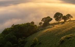 Картинка облака, свет, деревья, туман, утро, склон, холм