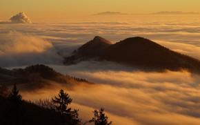 Картинка лес, свет, закат, горы, ветки, туман, рассвет, холмы, склоны, вершины, высота, даль, вечер, утро, дымка, …