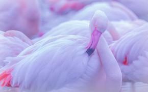 Картинка поза, птица, фламинго, боке, розовый фламинго
