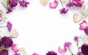 Картинка цветы, рамка, лепестки, flowers, purple, petals, frame, floral