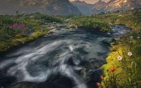 Картинка пейзаж, цветы, горы, природа, река, камни