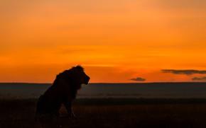 Картинка лев, силуэт, саванна, lion, savannah, silhouette, Jie Fischer