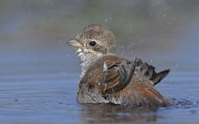 Картинка вода, капли, птица, DUELL ©
