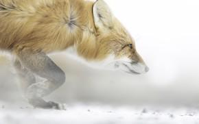 Картинка природа, лиса, зверь
