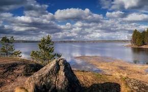 Картинка озеро, берег, камень, сосны