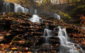 Картинка лес, листья, деревья, природа, камни, водопад, США