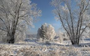 Картинка зима, иней, дорога, снег, деревья, пейзаж, природа, мороз