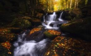 Картинка осень, лес, листья, деревья, камни, листва, водопад, мох, поток, каскад