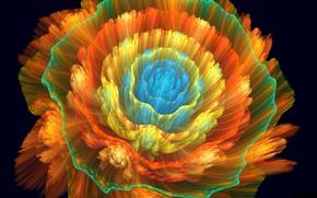 Картинка цветок, оранжевый, фон