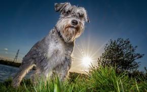 Картинка морда, закат, друг, Солнце, собака, вечер