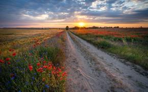Картинка дорога, солнце, лучи, пейзаж, закат, цветы, природа, поля, маки, луга, васильки