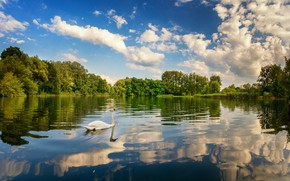 Обои небо, облака, деревья, озеро, отражение, птица, лебедь