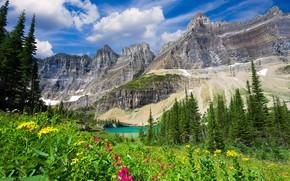 Картинка деревья, цветы, горы, природа, озеро, вид
