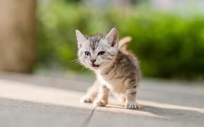 Картинка кошка, взгляд, свет, поза, котенок, малыш, котёнок, тротуар, боке
