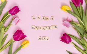 Картинка цветы, colorful, тюльпаны, розовые, pink, flowers, tulips, spring, purple, mother's day